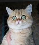 купить котенка СПб