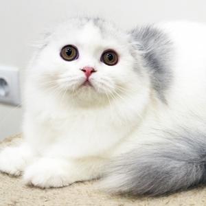 Kindlycat